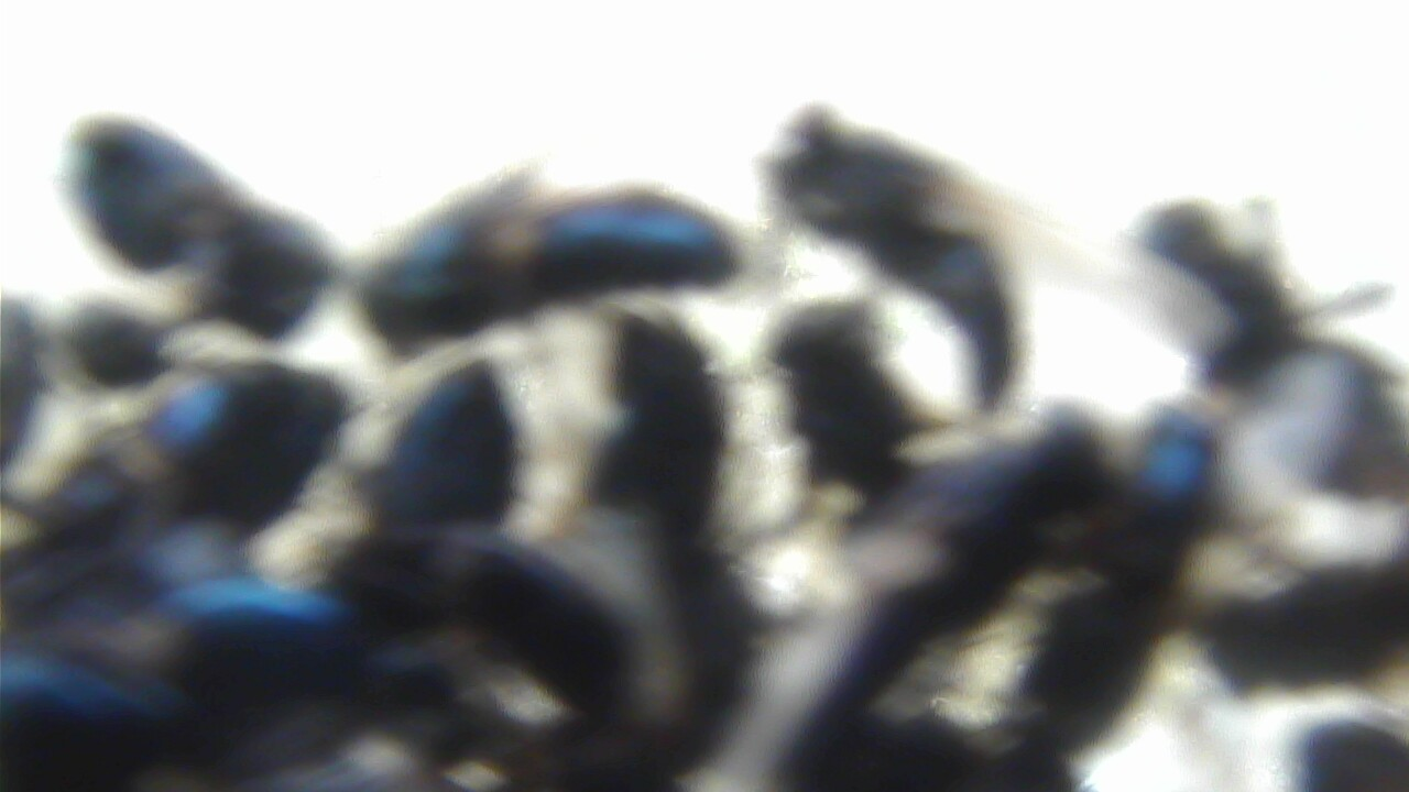 Breckenridge, Top of Peak 8